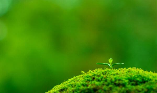 ポイント3.植物由来の温感成分