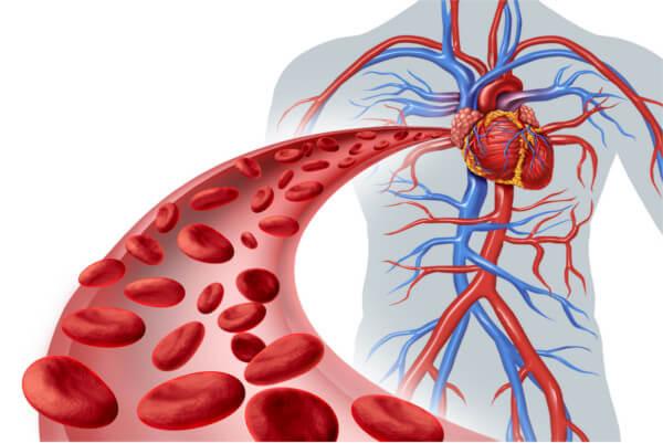 ルナパルテのこだわり1.血行促進サポート